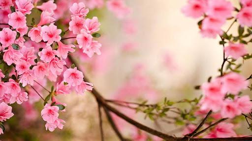 flores-de-primavera-fondo-1