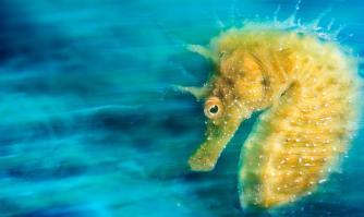 fotografía_subacuática_02