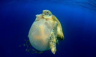 fotografía_subacuática_04
