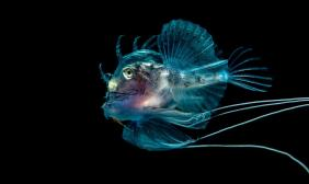 fotografía_subacuática_06