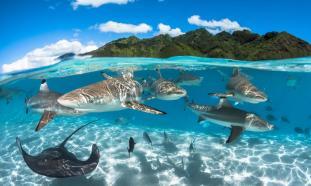 fotografía_subacuática_07