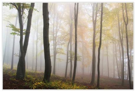 autumn-194834_960_720