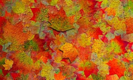 autumn-581887_960_720