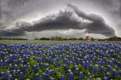 bluebonnetstorm