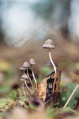 mushroom-1287425_960_720