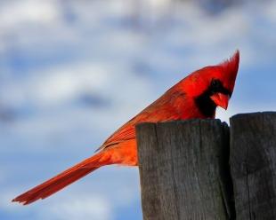 bird-107802_960_720