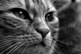 cat-1790097_960_720