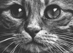 cat-1792684_960_720