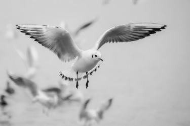 seagull-271103_960_720