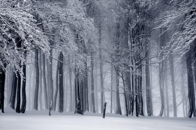 winter-1820987_960_720