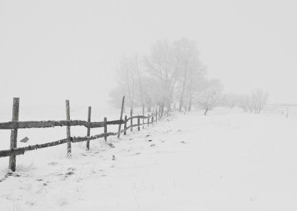 winter-20248_960_720